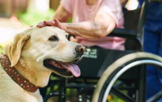Expanded Hope for Pets Program Image